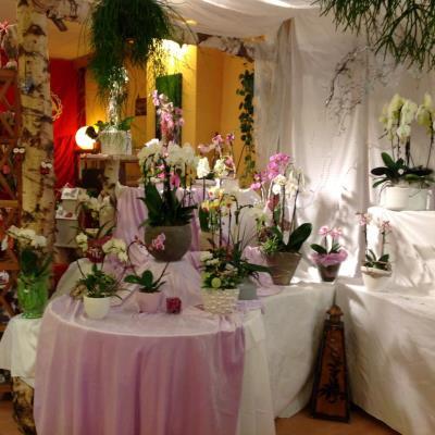Petites Fleurs, Accessoires & mehr