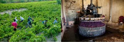 Vins Divins - nature & volupté