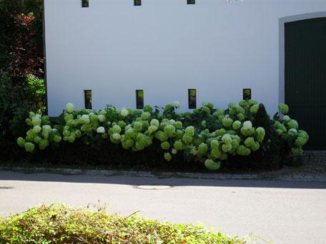 Top Jardin - Balice Divo