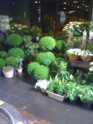 ell bore fleurs luxembourg decorative articles