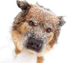 Some tips to protect your dog from the cold