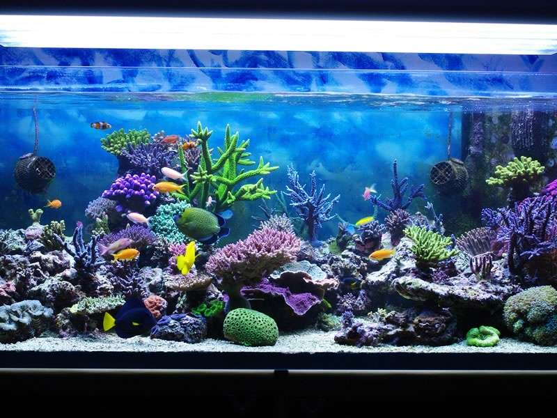Tips for cleaning an aquarium