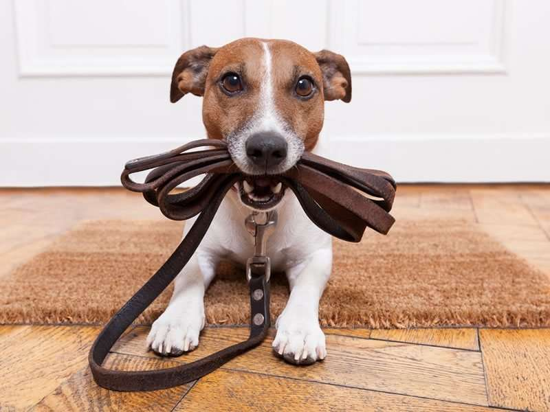 Should you take insurance for your pet?