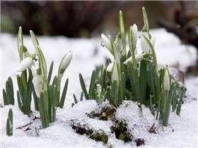 Jardinage en janvier : conseils et travaux à réaliser