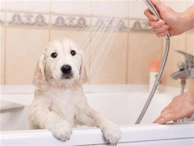 7 trucs pour donner le bain à votre chien