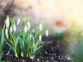Jardin en mars : conseils et travaux à réaliser