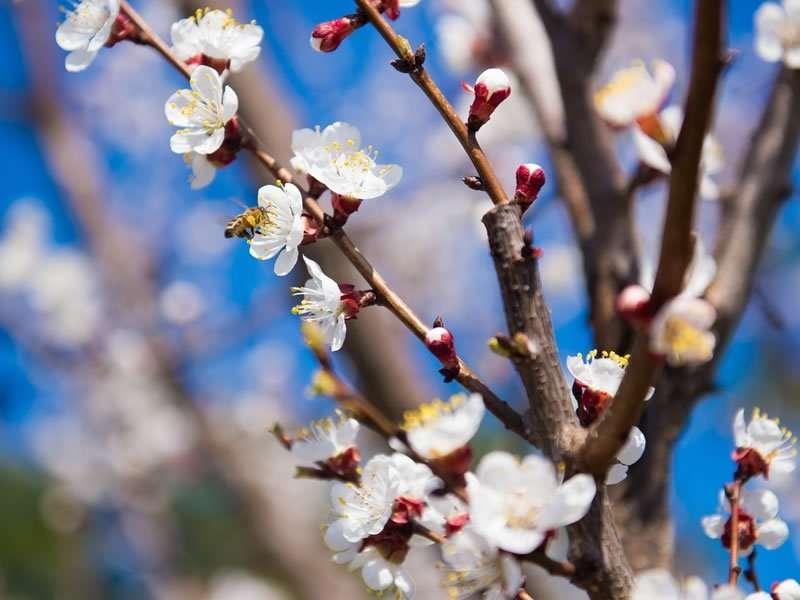 Jardin en avril : conseils et travaux à réaliser
