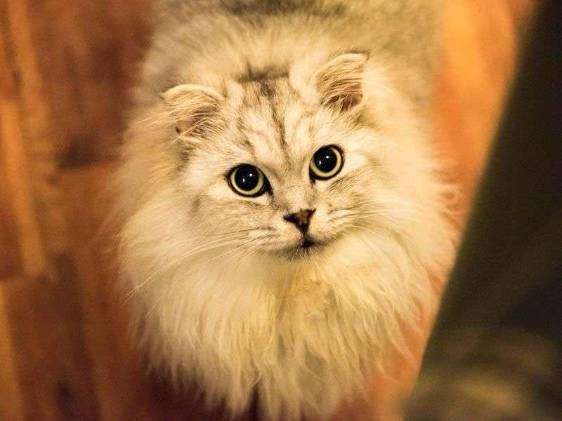 Un chat heureux en appartement ? C'est possible !