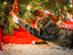 Chat et chien : comment sauver votre sapin de Noël ?