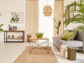 Avec quelles plantes décorer votre maison ?