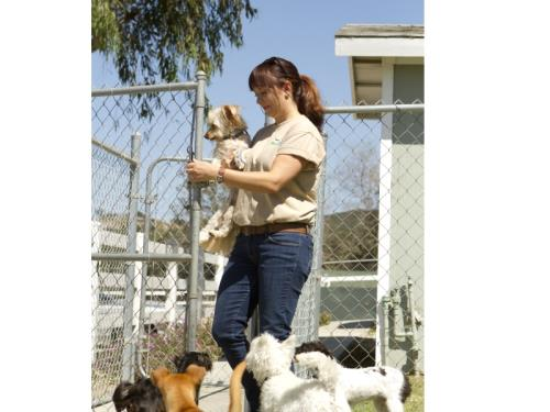 Service de garde d'animaux