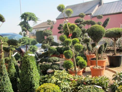 Création, aménagement de jardin