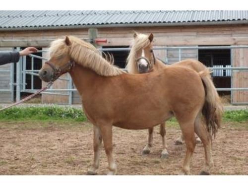 Pension pour chevaux
