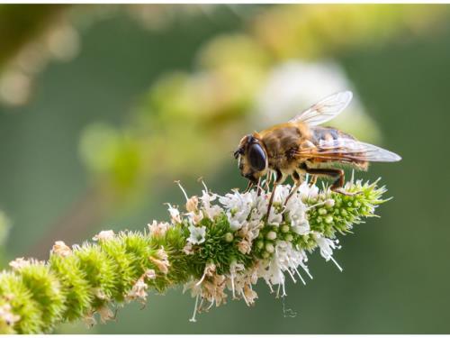 Expertise biodiversité