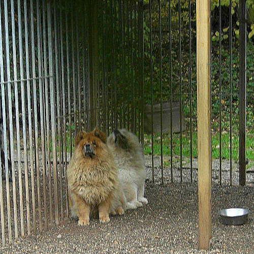 Géronimo's house- pension pour chats et chiens Ell Luxembourg