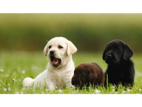 Pension trois chiens