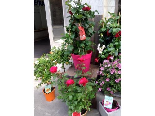 Plantes & fleurs d'extérieur