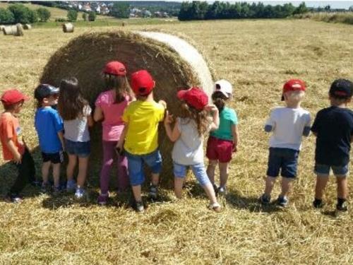 Sortie dans les champs de blé et de maïs