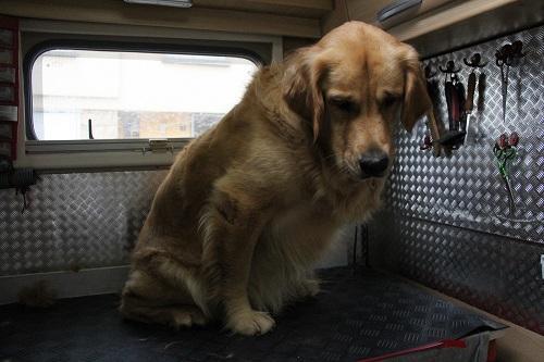 salon de toilettage Bella-sur-roues pour chats et chiens