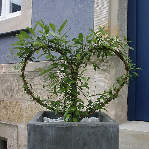 Lamouroux Alain - Jardinier-Paysagiste Imbringen