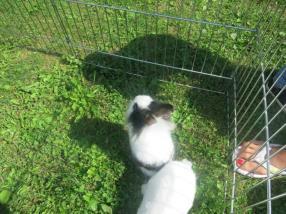 Nos petits lapins