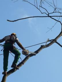 TP et milieu forestier