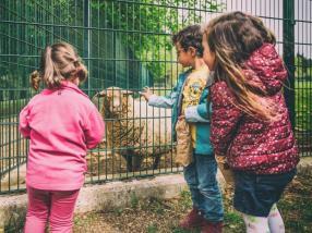 A la découverte des animaux