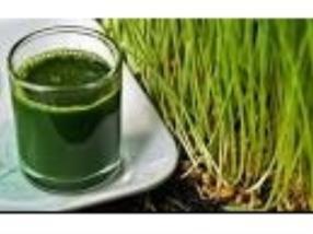 Weizengrassaft; herbes de blé