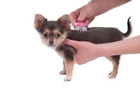 salon de toilettage bella sur roues chats et chiens