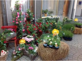 Plantes d'extérieur