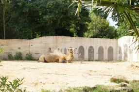 Excursion au zoo d'Amnéville