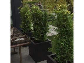 Plantes pour la terrasse
