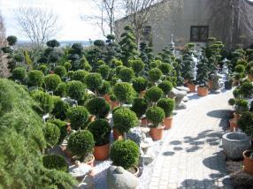 Arbres - Arbustes - Bonsaïs