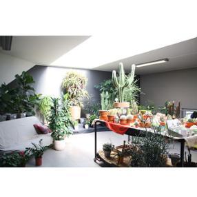 Flower Werding avenue Charlotte Differdange Plantes vertes