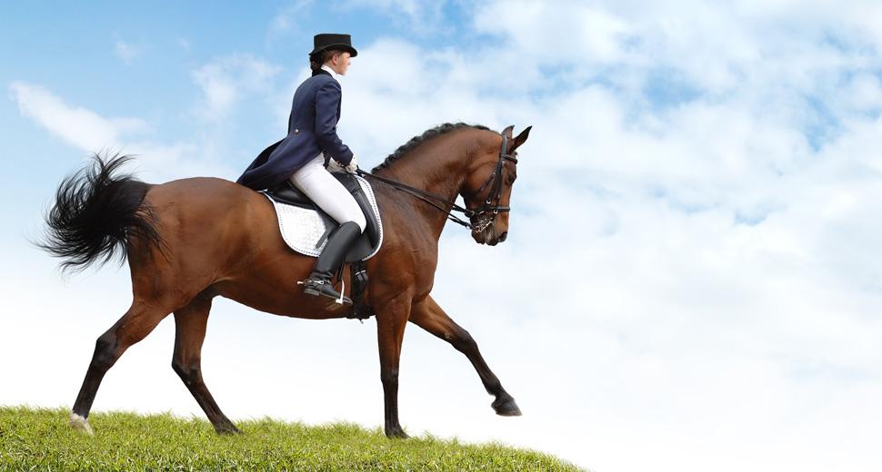Equestre Clairefontaine Arlon belgique Luxembourg marcheur piste