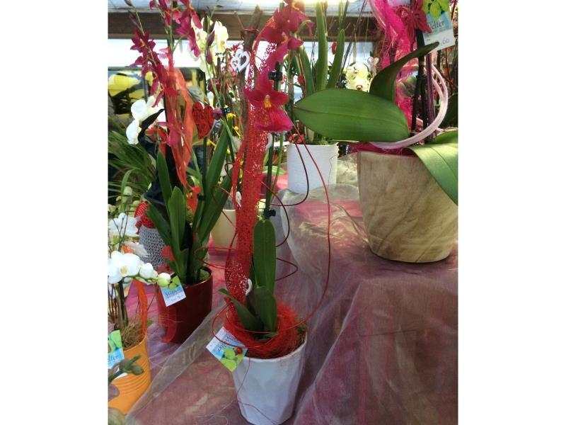 Orchidées (différents coloris)