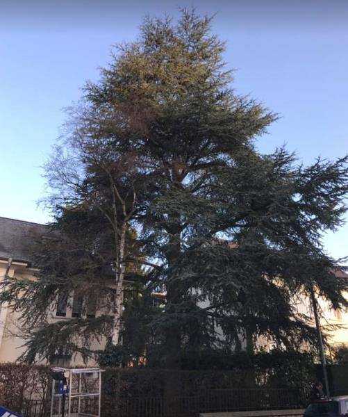 Taille d'arbre, arbuste, haie