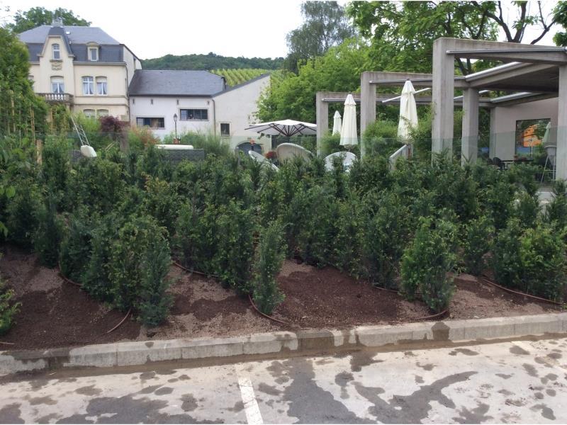 Installation de végétations occultantes