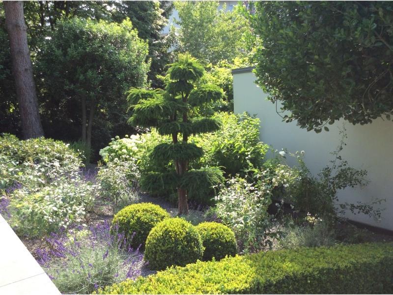 Evolution d'un jardin sur plusieurs années