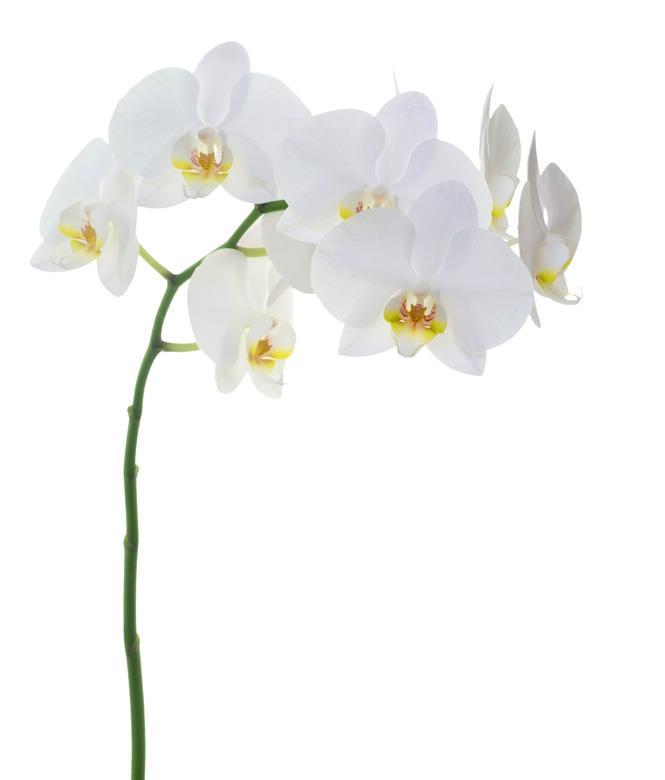Image 3 - Fleurs Breininger J.-P.