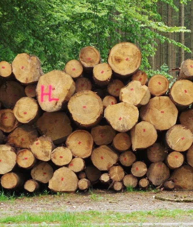 commerce de bois