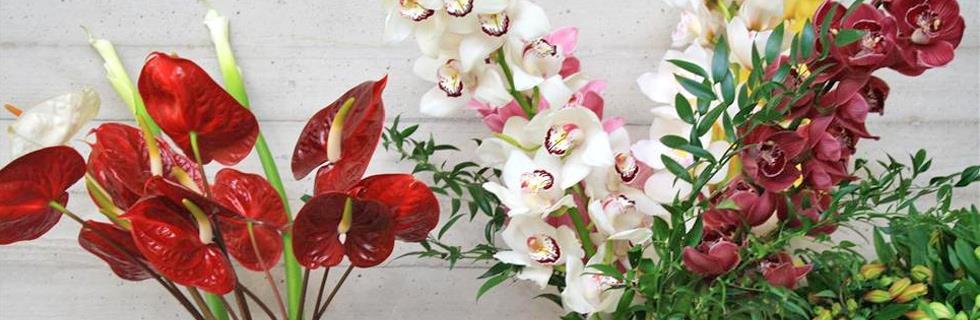 Image 1 - Fleurs François Klopp